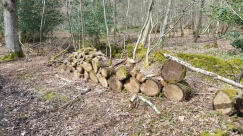 Log Pile in Forest