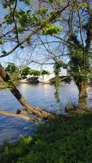 Chiswick Bridge from South Bank