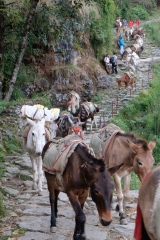 And the main transport, apart from people, are mules. These are happy unloaded mules going down a mountain.